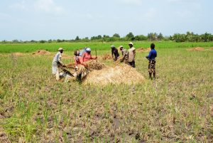 Equipped rice field as part of PARTAM project (TOGO)